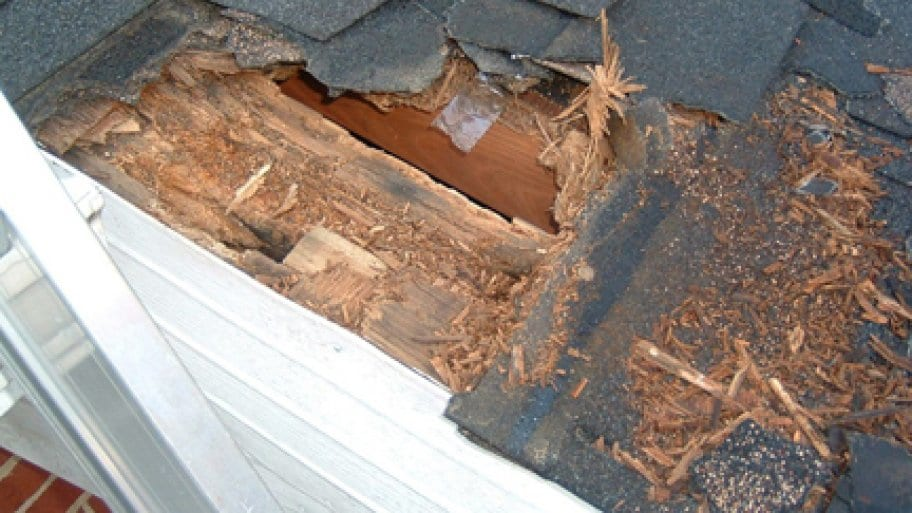 Top Common Reasons for Roof Damage